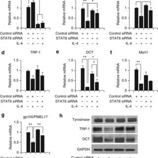 (PDF) IL-4 Inhibits the Melanogenesis of Normal Human