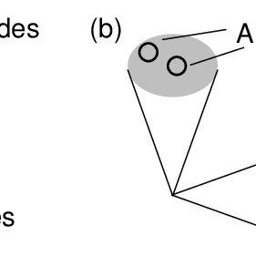 Polarization Sagnac interferometer for type-II down