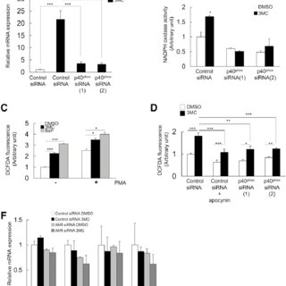 (PDF) AhR Modulates NADPH Oxidase Activity Via Direct