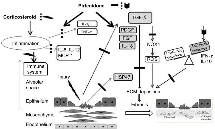 Potential mechanisms for the suppression of fibrogenesis