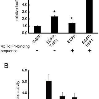 (PDF) TdIF1 Recognizes a Specific DNA Sequence through Its