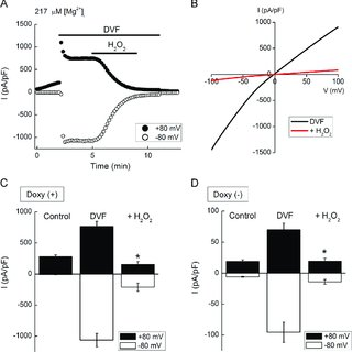 (PDF) Mg2+- and ATP-dependent inhibition of transient