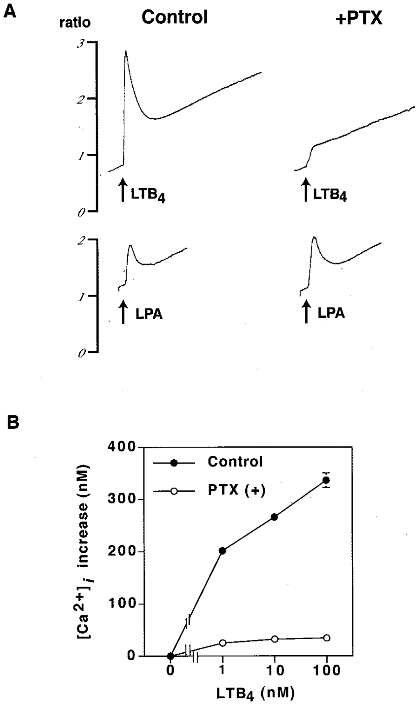 medium resolution of inhibition of ltb 4 induced calcium mobilization by pertussis toxin cells suspended in a modified hepes tyrode s bsa buffer containing 1 mm cacl 2 were