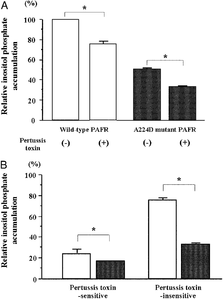 hight resolution of a effect of pertussis toxin treatment on inositol phosphate accumulation in cho cells expressing pafr cho cells expressing either wild type pafr open