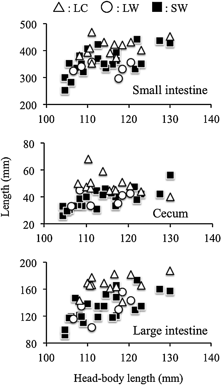 hight resolution of relationships between organ length small intestine cecum and large intestine and head