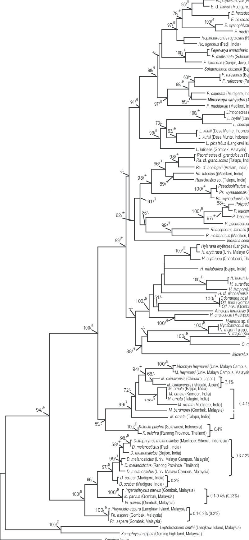 Maximum likelihood (ML) tree based on nucleotide sequences