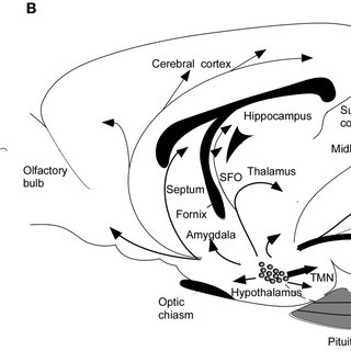 (PDF) Role of orexin in modulating arousal, feeding, and