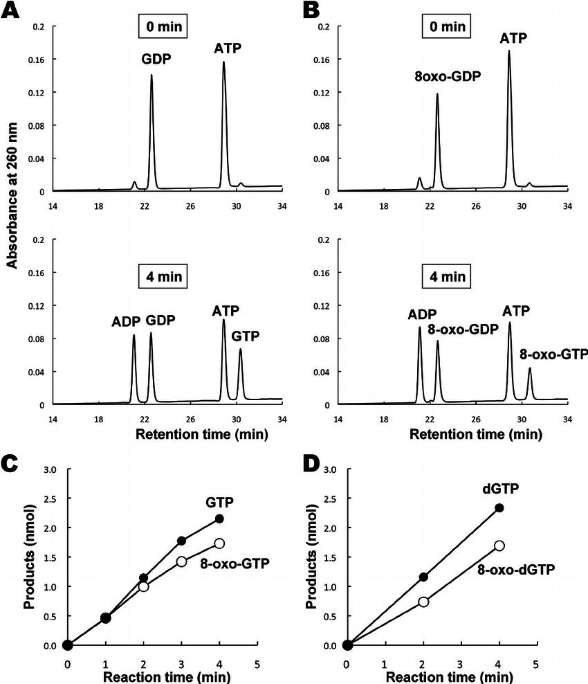 medium resolution of actions of nucleoside diphosphate kinase on nucleoside diphosphates download scientific diagram