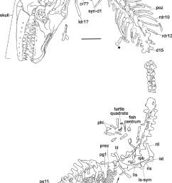 tmp 2007 034 0001 prognathodon overtoni line drawing of whole lobster body parts lobster skeleton diagram [ 745 x 1284 Pixel ]