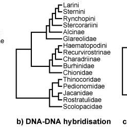 Phylogeny of Scolopacidae 50% majority rule supertree