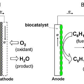 Schematic presentation of typical enzymatic electrode