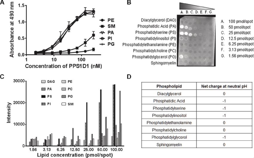 PPS1D1 binding studies on large panel of lipids. (A) ELISA