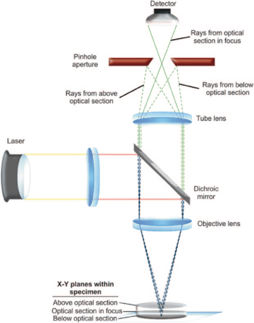 small resolution of 3 diagram of the light path in a confocal microscopy system pinhole aperture is in