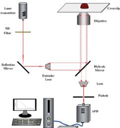 schematic diagram of resonance light scattering correlation spectroscopy rlscs  [ 850 x 985 Pixel ]
