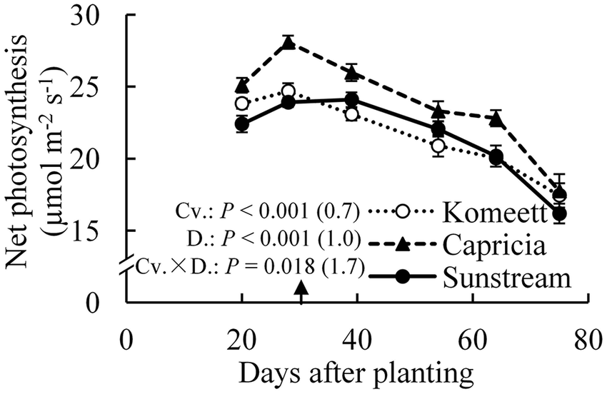 Time course of the net photosynthesis rate of leaf number