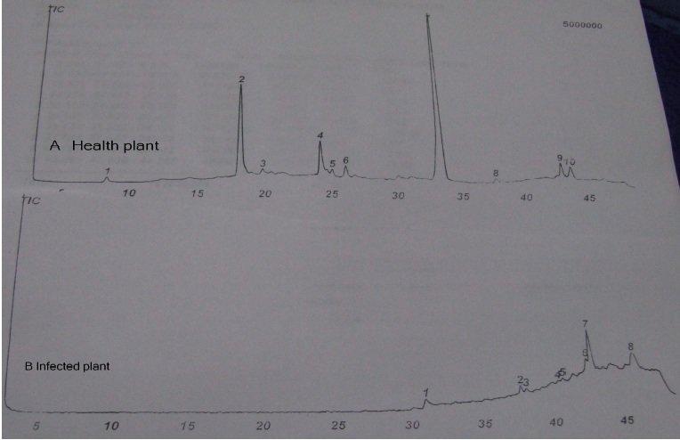 Gas chromatography/mass spectrometry (GC/MS) chromatograms