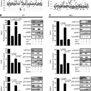 Correlation between mTORC1 activity and sensitivity to