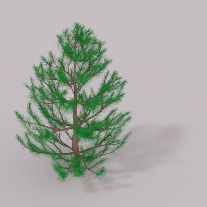 Check out these 10 small trees and learn what will fit best in your yard. An Example For Conifers Which Contain A Huge Number Of Small Leaves Download Scientific Diagram