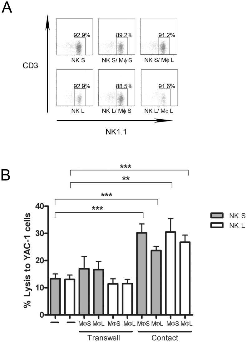 (A) Purity of NK cells used for the cytotoxicity test