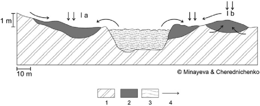 Cross section of mire massifs of large river valleys in