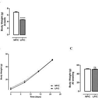 (PDF) Protein-restriction diet during the suckling phase