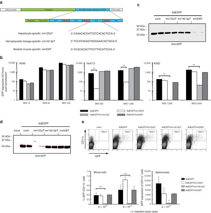 In vitro and in vivo expression profiles of miRNA