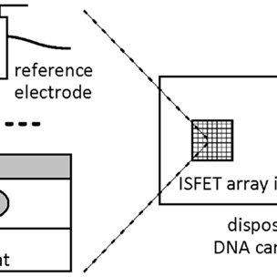 A high-throughput electrical monitoring of DNA