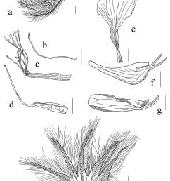characters of lotus parviflorus desf a flower b c androecium petal diagram characters of [ 850 x 1182 Pixel ]