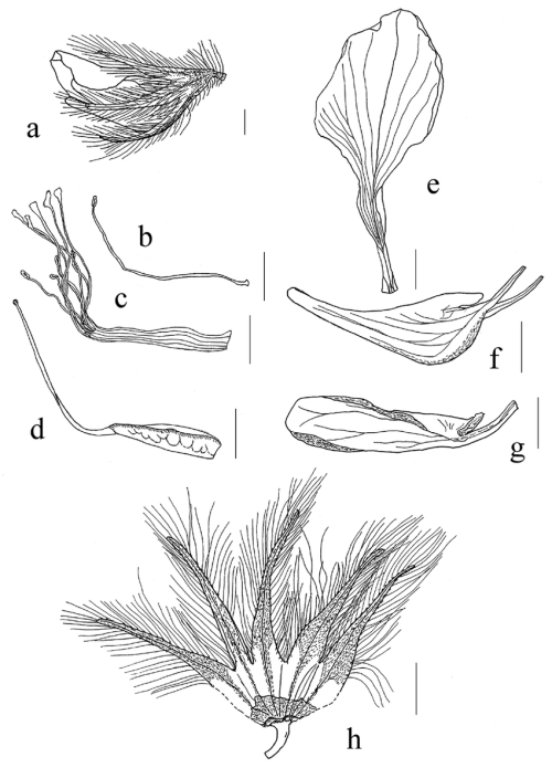 small resolution of characters of lotus parviflorus desf a flower b c androecium petal diagram characters of