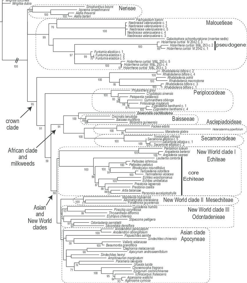 Fig. . Maximum likelihood tree of species relationships