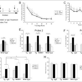 (PDF) Targeting Amyloid-beta Peptide (Abeta) Oligomers by
