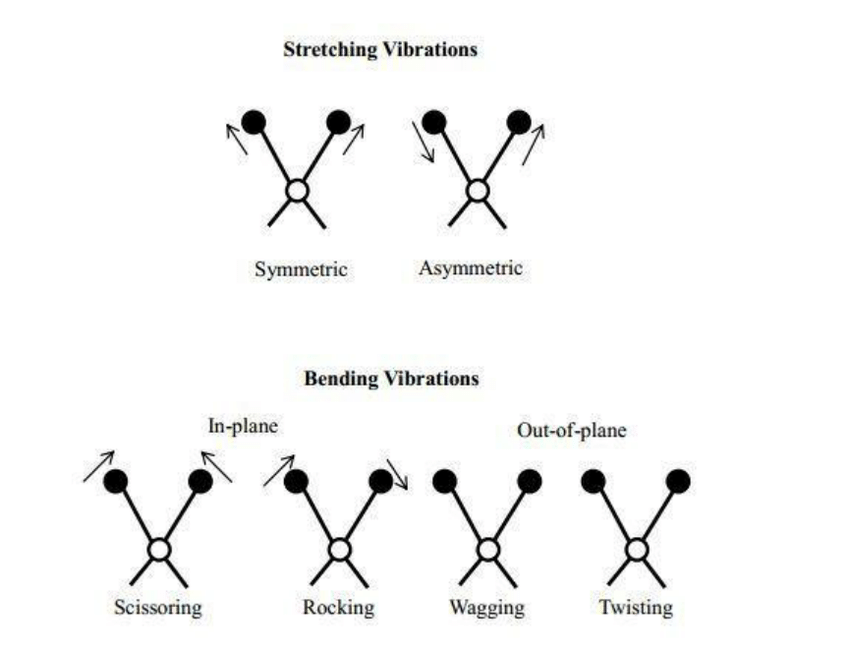 Schematic representation of the different molecular