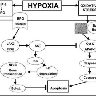 Full Respiratory System Diagram Capillary Alveoli Diagram