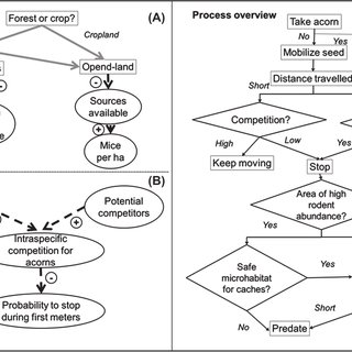 (PDF) Predicting forest management effects on oak-rodent