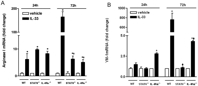 BMDM from WT, STAT6−/−, or IL-4Rα−/− mice were stimulated