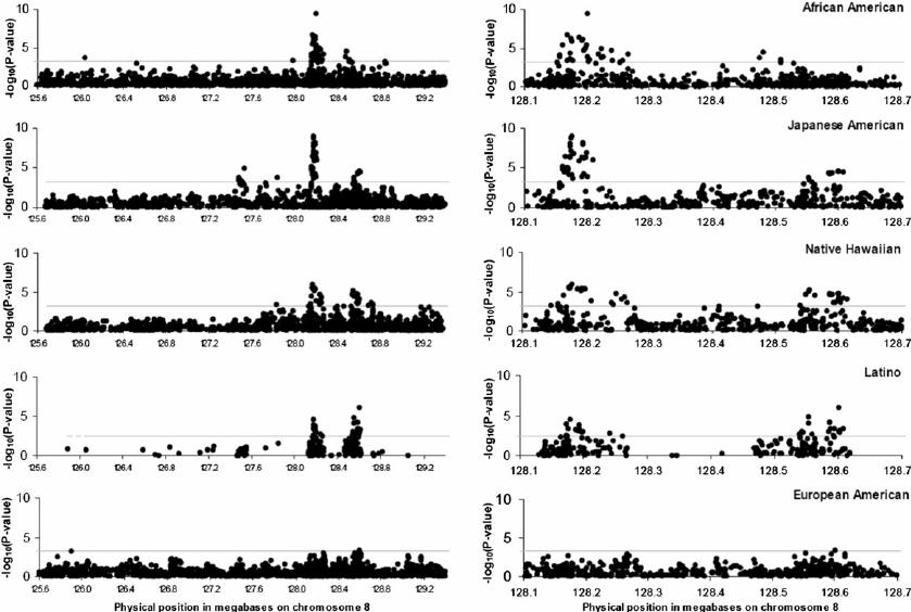 Transethnic linkage disequilibrium plots for 8q24 locus