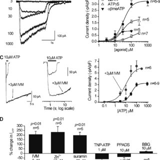 Reduced lysosomal colocalization and increased surface