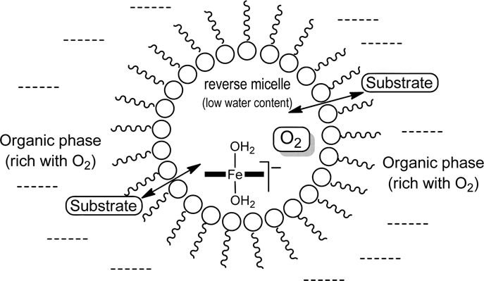Schematic drawing of the reverse micelle incorporating