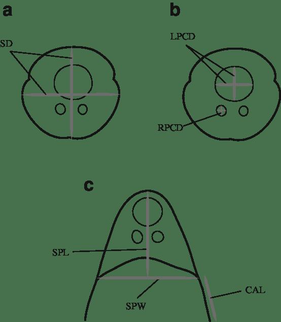Morphometric measurements taken of the various Unicapsula