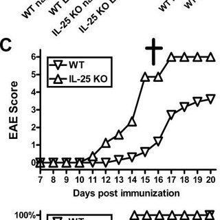 (PDF) IL-25 regulates Th17 function in autoimmune inflammation