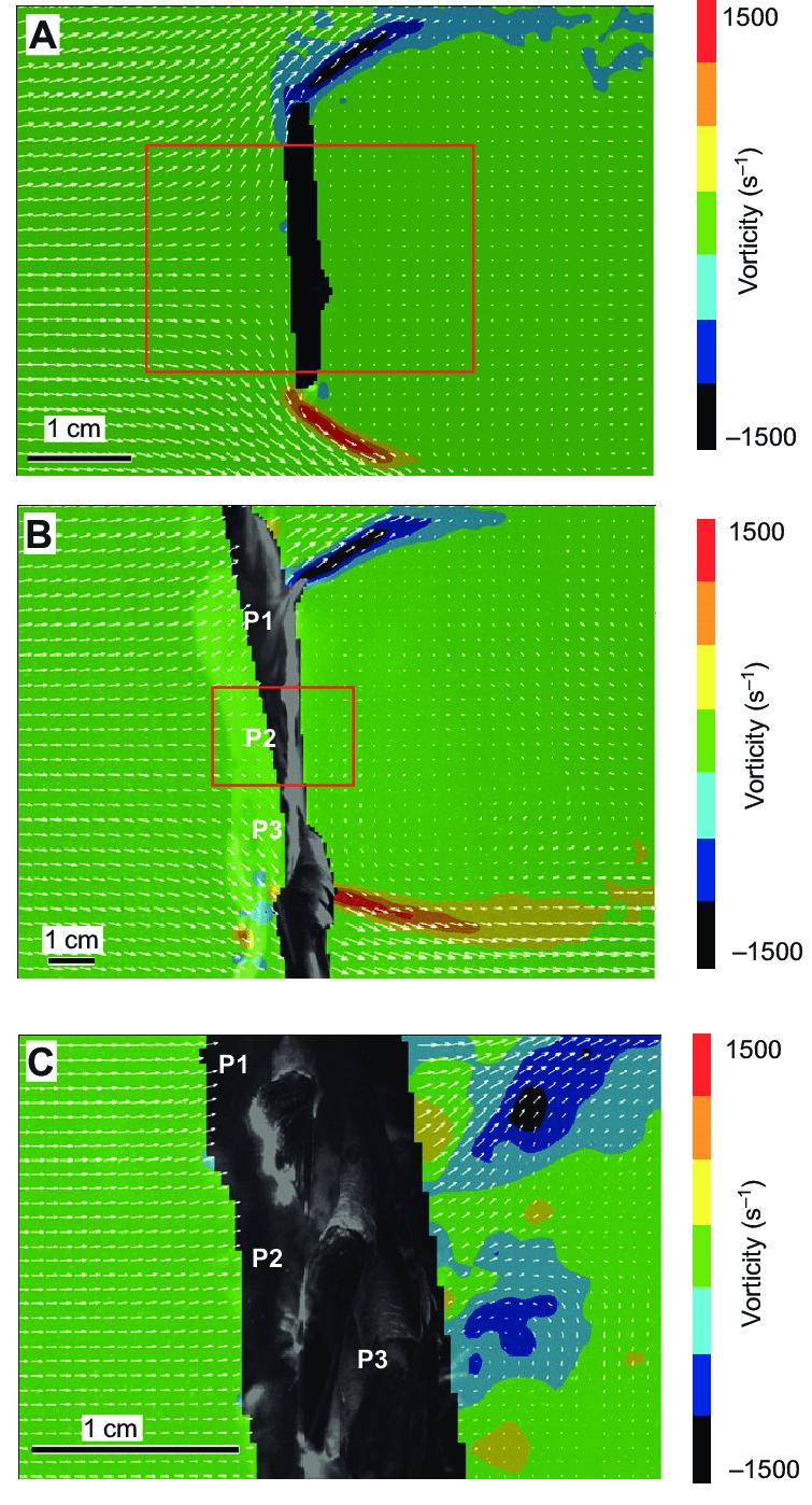 duck wing diagram shunt trip circuit breaker wiring macroscale transmissivity in wings and a cardboard model as download scientific