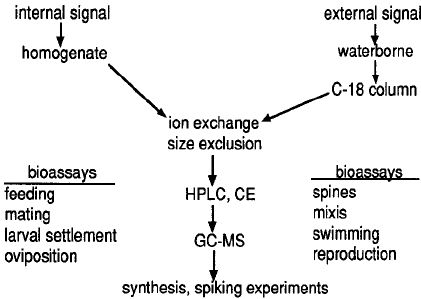 rotifer diagram labeled online database bioassay directed fractionation of chemical signals