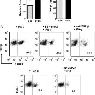 Enrichment of Foxp3+ cells in the IFN-γ protocol involves