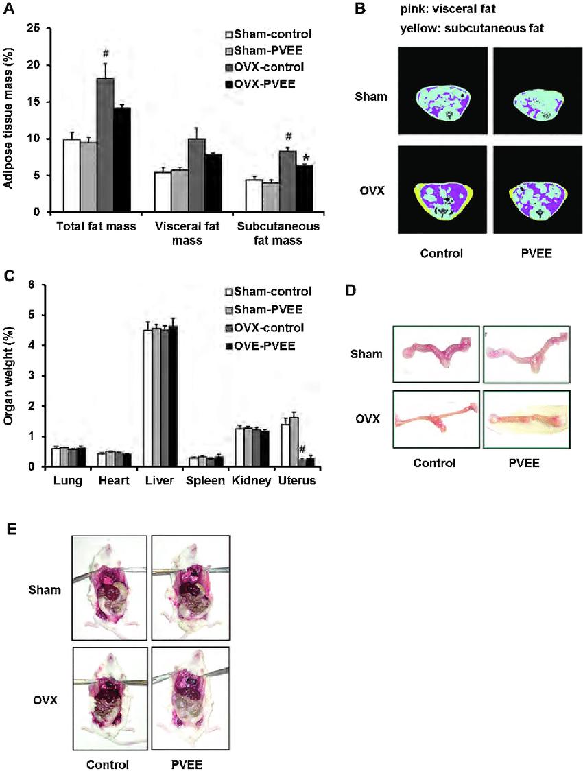medium resolution of effects of long term intake of the kudzu vine ethanol extract pvee diet