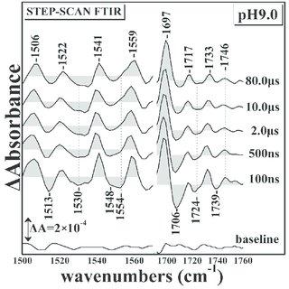 DFT optimized geometries in heme-iron-NO binuclear