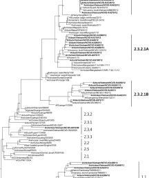 phylogenetic trees for the hemagglutinin ha and neuraminidase na genes from the [ 793 x 1170 Pixel ]