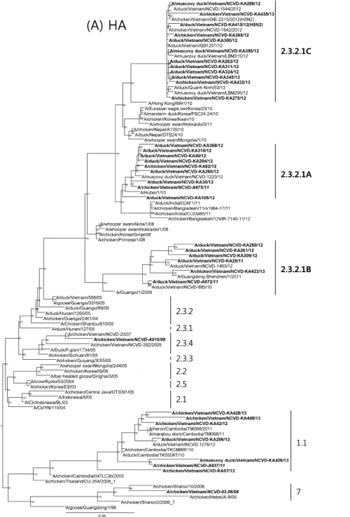 small resolution of phylogenetic trees for the hemagglutinin ha and neuraminidase na genes from the