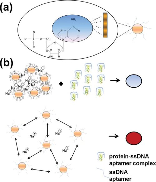 small resolution of  a the nitrogenous bases of single stranded dna have high affinity for the