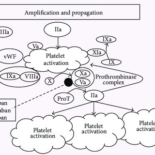 Mechanism of anticoagulants effect of indirect (vKAs) and