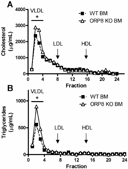 Increased VLDL cholesterol and triglycerides in LDLr KO